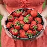 Die leckersten aller Erdbeeren