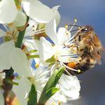 Garten-Paradies für Bienen und Hummel