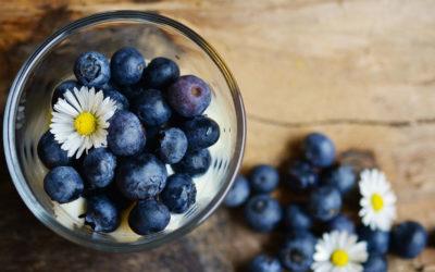 Heidelbeeren – Der kleine blaue Genuss