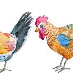 10 überraschende Dinge über Hühner und Hühnerfleisch