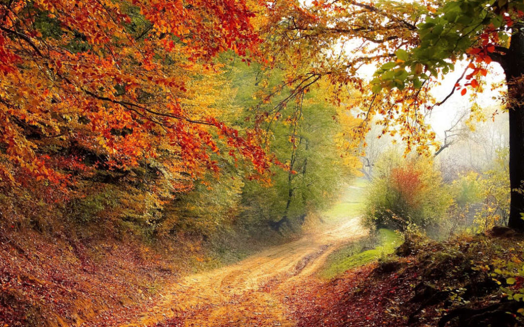 Das große Herbstquiz