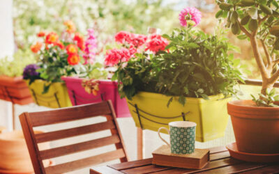 Top 20: Die besten Pflanzen für Balkonkästen